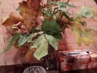 Jesienny bukiet liści