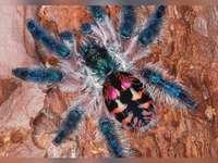 goliad spindel