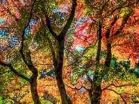 Pintando árvores coloridas de céu