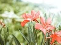 detailní fotografie květu oranžového okvětního lístku - Willemstad, Curaçao