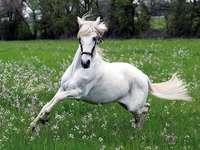 άσπρο άλογο - Όμορφο λευκό άλογο.