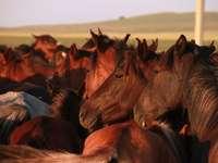 Αλογα. - Αρκετά άλογα μαζί.