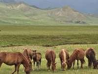 Αγρια άλογα - Άγρια άλογα που βόσκουν;