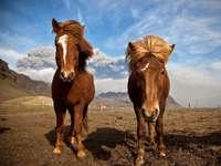 Két ló - Két vad ló.