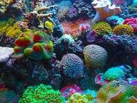 korallzátony - Gyönyörű korallzátony