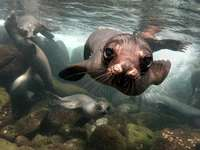 Sea lion - Lovely animals ..