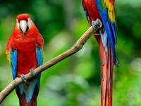 Papoušci (pták)