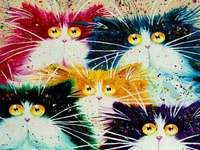 colorful cats - five colorful cats