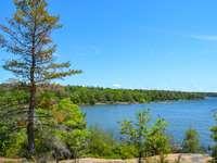 arbres verts près d'un plan d'eau pendant la journée - Parc provincial Killbear.