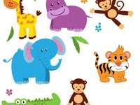 Animals__
