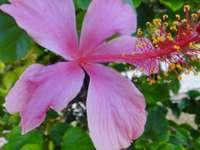 Une fleur unique.