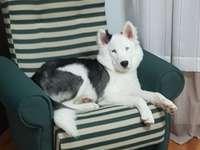 correio de cachorro legal - Eu realmente não sei como descrevê-lo, então vou descrevê-lo com dois sinais:>