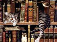 Котка на рафта с книги