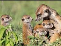 Οικογένεια ζώων
