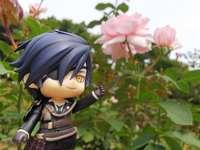 Mitsutada entre rosas - Mitsutada entre lindas rosas cor de rosa
