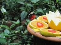 selektywna fotografia fokus motyla na pokrojone owoce