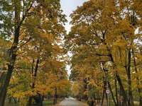 Autumn Spa Park