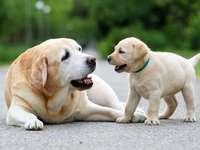 de puppy en zijn moeder