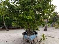 barco com planta - o barco se tornou o elemento fundamental do jardim