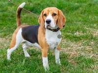 Il mio cane si chiama bambola - il cane è la mia famiglia, è un essere della mia famiglia, è giocoso, fedele e lo amo e mi prendo