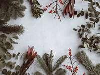 blandad typ av löv som ligger på en vit panel - Julbakgrund - tall, eukalyptus, bär.