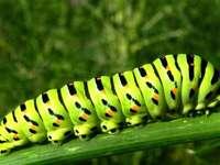 Как се нарича това насекомо?