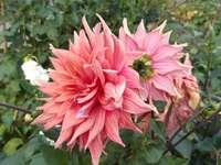 virágemlék nyártól