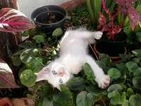 Que vida de gato