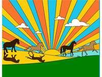Piccoli cavalli