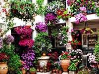 Cordoba Patio city in Spain - Cordoba Patio city in Spain