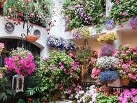 Cidade de Cordoba Patio na Espanha - Cidade de Cordoba Patio na Espanha