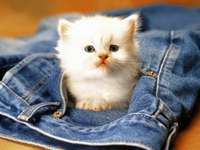 petit chaton blanc - m ....................