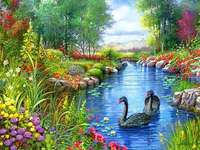 swans floating on the river - m .........................