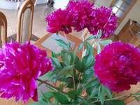 piwonie w wazonie - piwonie w wazonie na stole