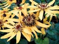 Autumn flowers - Autumn flowers - Easy puzzle for children