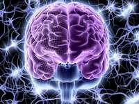 Menselijke brein - Bio-elektriciteit van het menselijk brein