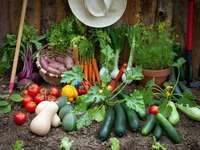 cibo organico - m ........................