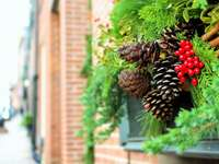 zavřít pohled šiškami na zelených rostlinách na okně stále - Boston, Spojené státy