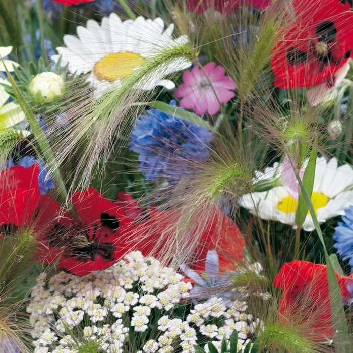 flori de câmp - m (10×10)
