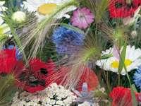 field flowers - m ......................