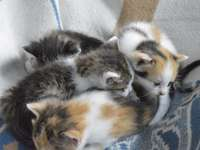 chatons ..... - m /................../