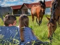 на поляната сред пасещи коне