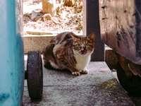 gato branco e marrom sentado na cerca de madeira azul