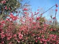 Flores silvestres - Flores silvestres em um passeio
