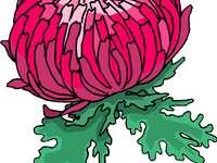 Puzzle - Chryzantema - Rozwiąż zagadkę i powiedz, jaki kwiatek znalazłeś!