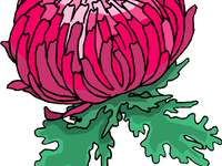 Puzzel - Chrysanthemum