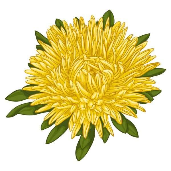 Rompecabezas de crisantemo - Rompecabezas del crisantemo: ¡resuelve y di qué flor descubriste (2×2)
