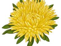 Chrysanthemum puzzle - Chrysanthemum puzzle - solve and say what flower you discovered!