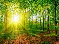 Les v lete - Morgon i en grön skog