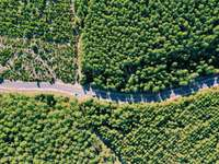 árvores verdes na estrada de concreto cinza durante o dia - Forêt Domaniale de Lacanau, Lacanau, França